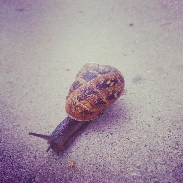 Snail medicine