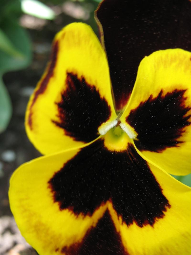 Flower_power_2